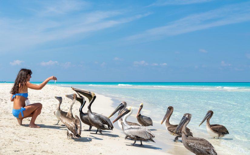 🏝️ Белый песок, безоблачное небо, голубая вода – это все о Кайо–Коко, райском острове Кубы.